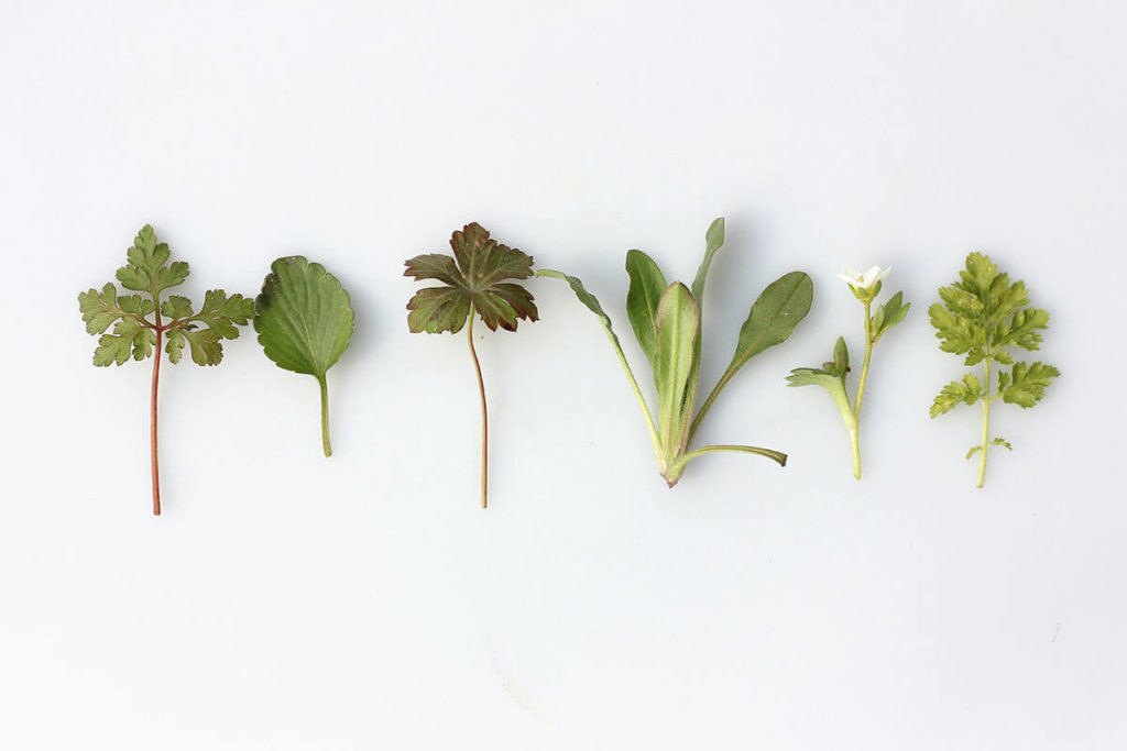liście ziół