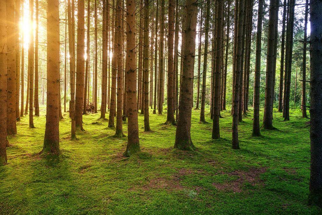 Sloneczny las