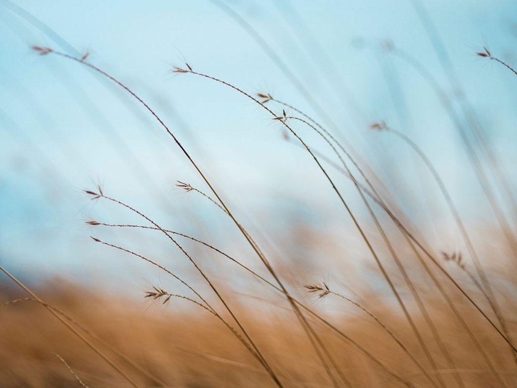 zdzbla trawy